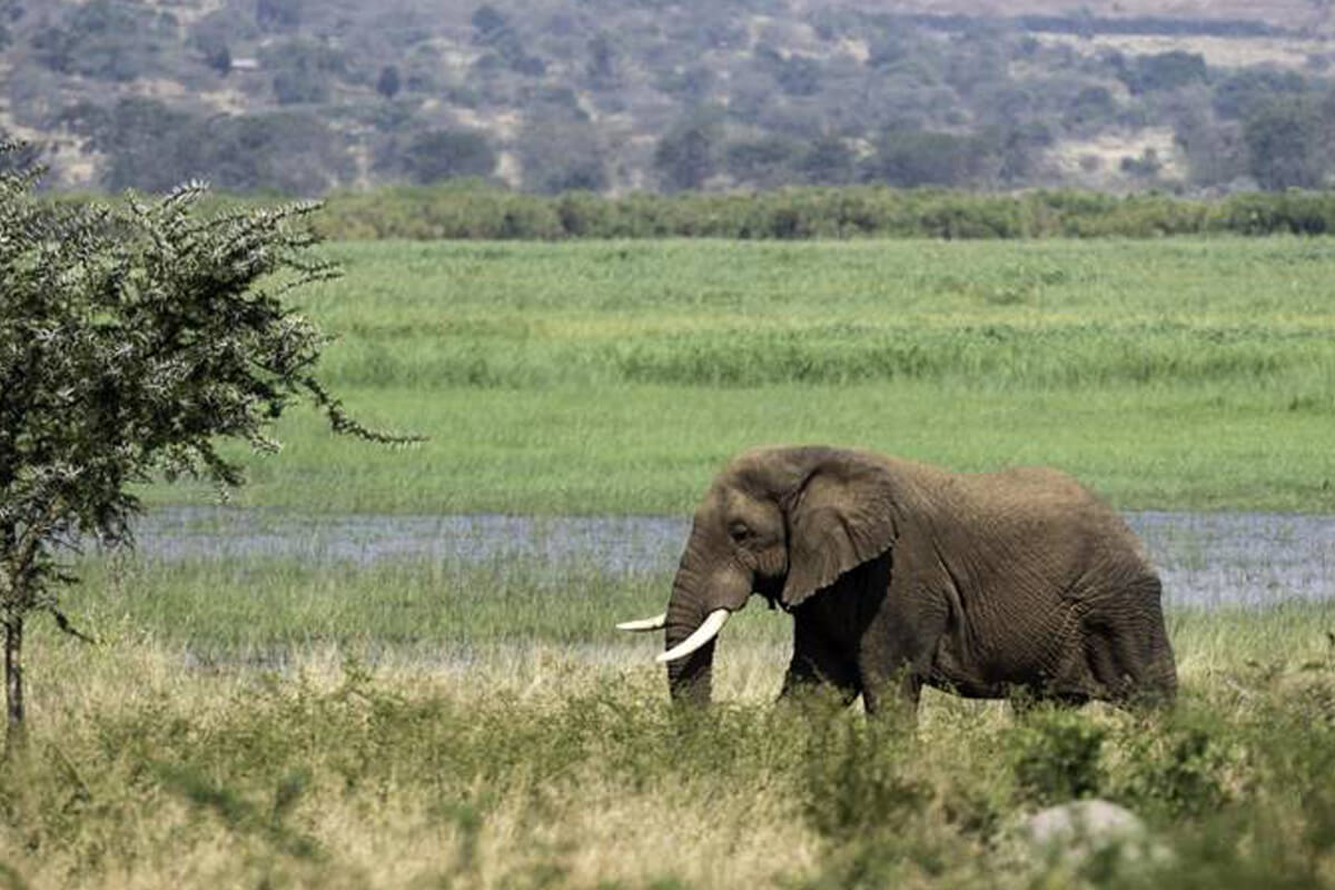 wildlife safaris in rwanda, rwanda safaris, wild rwanda safaris, akagera, rwanda gane drive, wild animals in rwanda, akagera national park, rwanda safaris, east to west safaris, rwanda boat rides, boat safaris rwanda, rwanda tourism