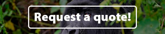 gorilla safaris rwanda, gorillas in rwanda, mountain gorillas in rwanda, rwanda gorilla trekking, tracking gorillas in rwanda
